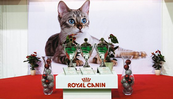 Royal canin for Royal canin ecuador